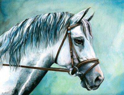 Naklejka Szary akwarela koń malowany.