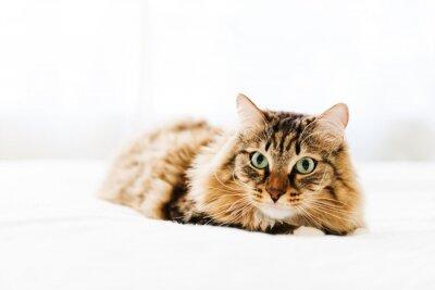 Naklejka Szary kot leżący na łóżku