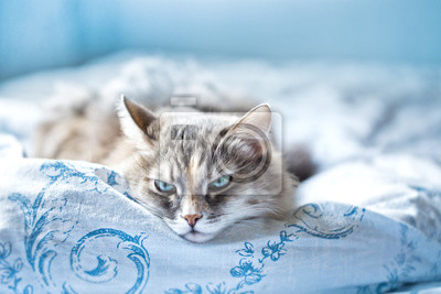 Naklejka Szary Kot Wygodnie Leży W Tkaninie Pościelowej Na Wymiar