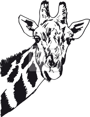 Naklejka Szkic głowy żyrafa. Ilustracja wektorowa na ...
