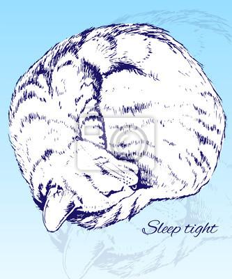 Szkic Śpiąca Home Cat