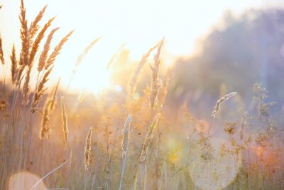 Naklejka Sztuka jesień słoneczny charakter tle