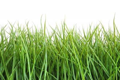 Naklejka Tall mokra trawa na biały