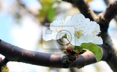 Tarnina kwiat