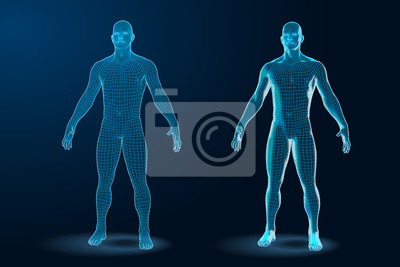 Naklejka Temlate set of Human Body 3D Polygonal Wireframe Blueprint. Vector Illustration