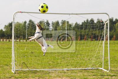 Naklejka Terier Zabawna gra piłkarska jako bramkarz