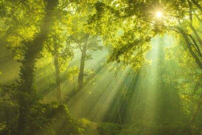 Naklejka The Forest of Heaven