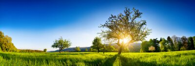 Naklejka The sun shining through a tree on a green meadow, a panoramic vibrant rural landscape with clear blue sky before sunset