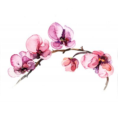Naklejka the watercolor flowers orchid isolated on the white background
