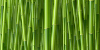 Naklejka Tiges de bambous 1