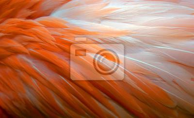 Naklejka Tło piór Flamingo