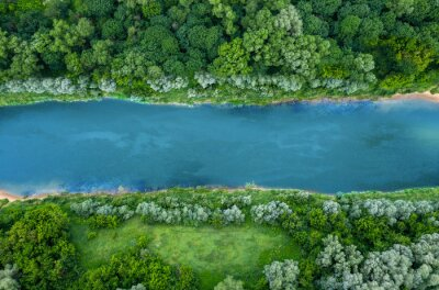 Naklejka top view of summer green trees with a river