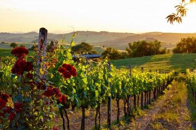 Naklejka Toskania Winnice w przypadku