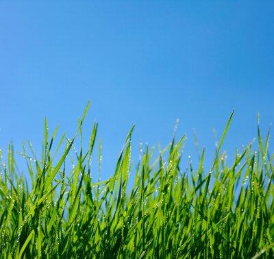 Naklejka Trawa i niebo