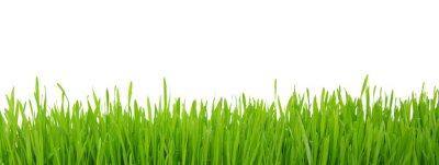 Naklejka trawa na białym