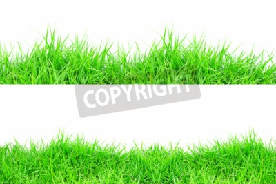Naklejka Trawa na białym tle