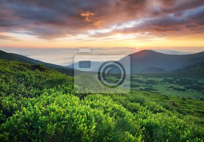 Trawa na halnym polu podczas wschodu słońca. Piękny naturalny krajobraz w okresie letnim