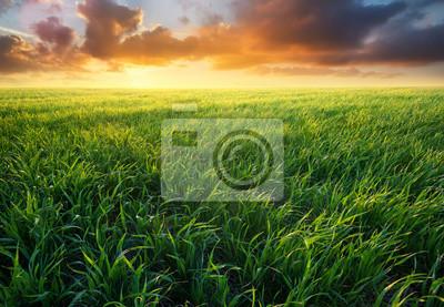 Trawa na polu podczas wschodu słońca.