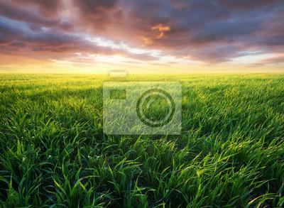 Trawa na polu podczas wschodu słońca. Krajobraz rolniczy w okresie letnim