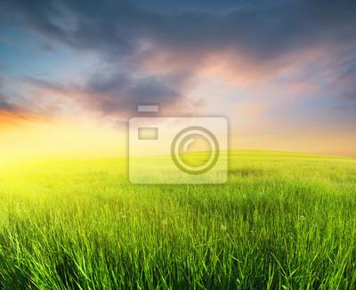Trawa na polu podczas wschodu słońca. Krajobrazu rolniczego w okresie letnim ..