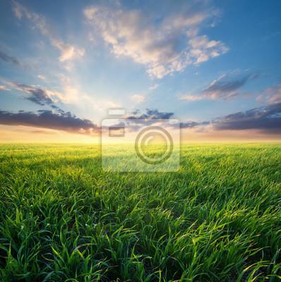 Trawa na polu podczas wschodu słońca. Krajobrazu rolniczego w okresie letnim