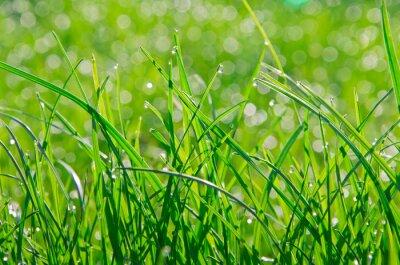 Naklejka trawa z rosą