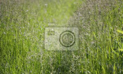 trawy i pyłki