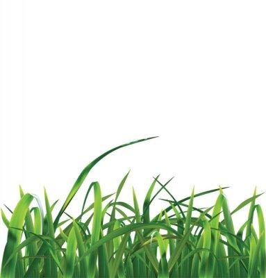 Naklejka Trawy. Ilustracja wektorowa
