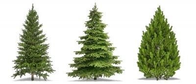 Naklejka Trees Isolated on white Background. Pine Tree, White Spruce, Bosnian Pine. High Resolution