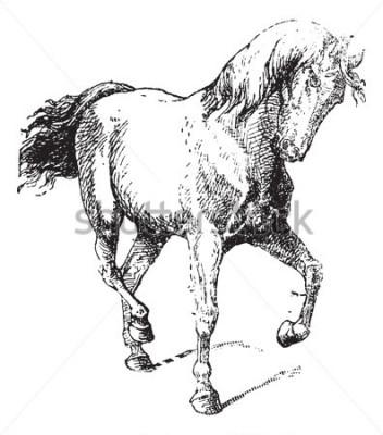 Naklejka Trening koni, vintage grawerowane ilustracje. Słownik słów i rzeczy - Larive i Fleury - 1895