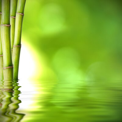Naklejka troncos de bambú verde sobre el agua