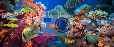 Naklejka Tropical Fish i Coral Reef