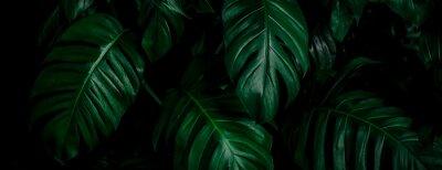 Naklejka tropical leaf, abstract green leaf texture, nature background