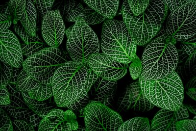 Naklejka tropical leaves, abstract green leaves texture, nature background