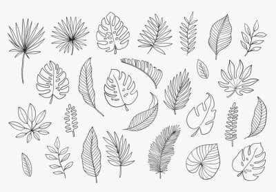 Naklejka Tropical Leaves in doodle style. Vector hand drawn black line design elements. Exotic summer botanical illustrations. Monstera leaves, palm, banana leaf.