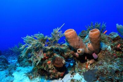 Naklejka Tropikalna rafa koralowa w Zatoce Meksykańskiej