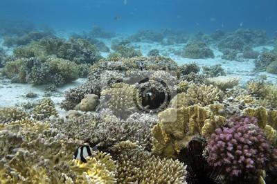 Naklejka Tropikalne ryby i korale twarde