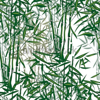 Naklejka tropikalny bambus wektor wzór na białym tle ..