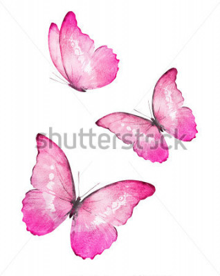 Naklejka Trzy kolorowe motyle akvarela, na białym tle