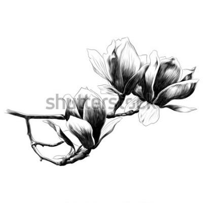Naklejka trzy kwiat magnolii szkic grafika wektorowa rysunek monochromatyczny