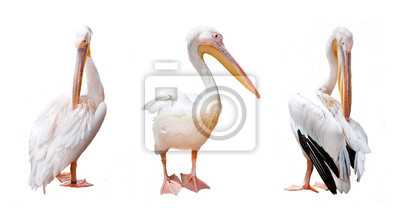Trzy pelikan dziób i różowe na białym tle