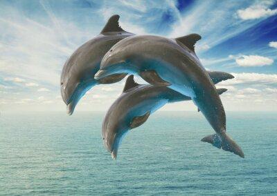 Naklejka trzy skoki delfiny