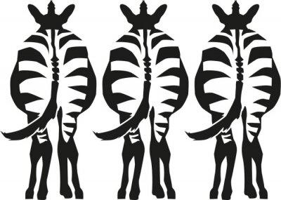 Naklejka Trzy zebry stojąc pokazano tam z powrotem