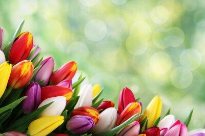 Naklejka tulipan tło
