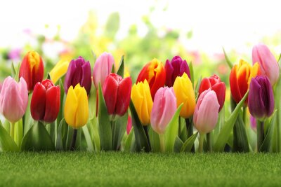 Naklejka Tulipany