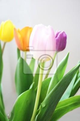 Naklejka Tulipany kwiaty