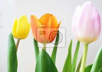 Tulipany kwiaty