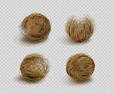 Naklejka Tumbleweed, dry weed ball isolated on transparent background. Vector realistic set of western desert dead plants, rolling dry bushes, old tumble grass in prairie
