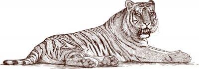 Naklejka Tygrys leżący