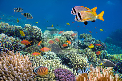 Naklejka Underwater pędu żywe rafy koralowej z ryb